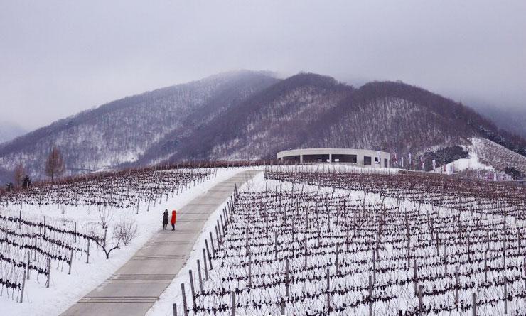 禹山兀北冰红葡萄酒 集安市嘉冠农业生物科技有限公司